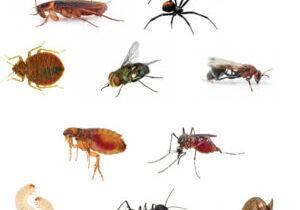 Pest Control NZ